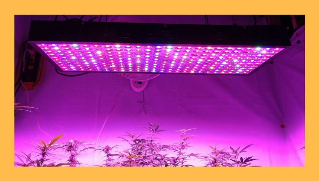LED grow lights growing herbs