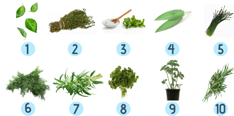 best herbs for indoor gardening