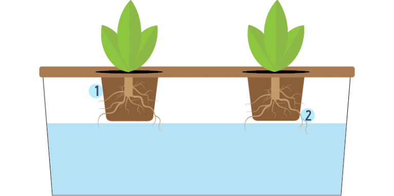 root dipping hydroponic technique