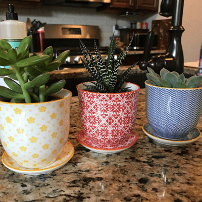 chive round ceramic pots for indoor plants