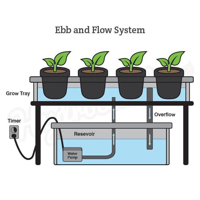 ebb & flow hydroponic technique system