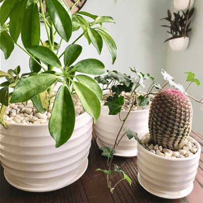 mygift 3 round pots for indoor plants