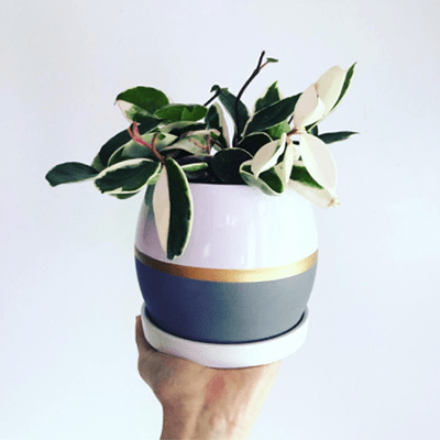 poety ceramic pot for indoor plants