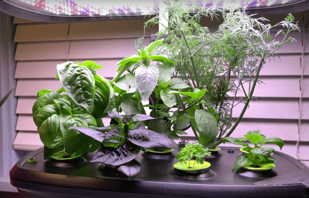 aerogarden sprout yields