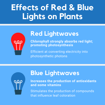 red and blue grow lights chart