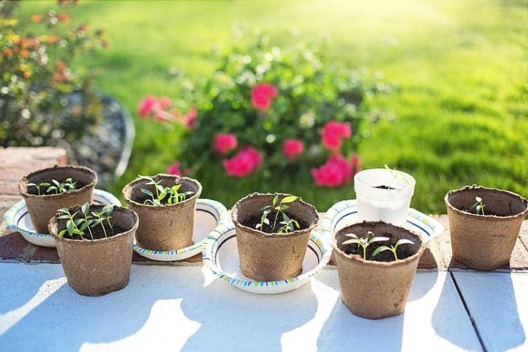 Planter Based Herb Gardening Kits