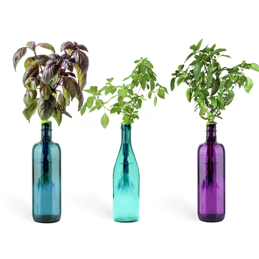 bottle herb gardening kit