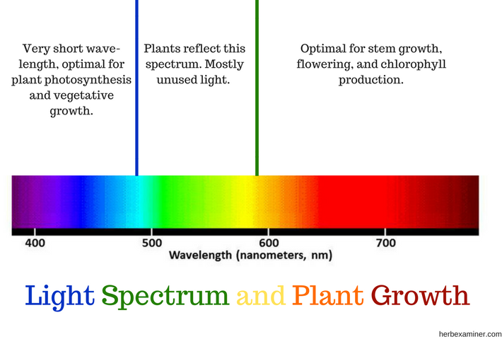 Everything You Need to Know About Grow Lights – The Ultimate Guide