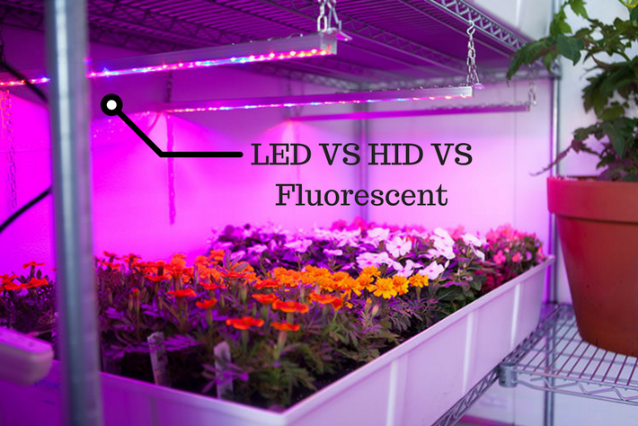 header LED VS HID VS Fluorescent Grow Lights Image