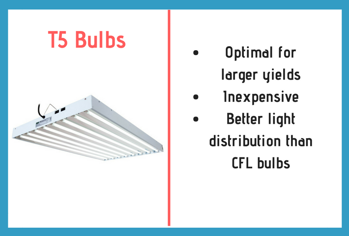 t5 bulbs description and information